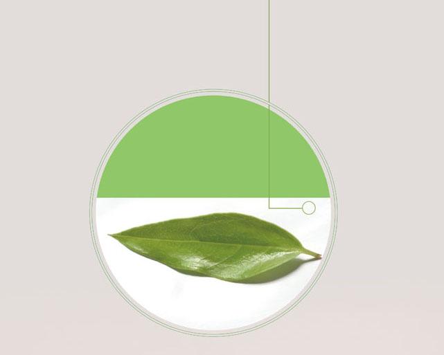 一片绿叶绘画PSD素材