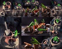 盆栽植物拍摄高清图片