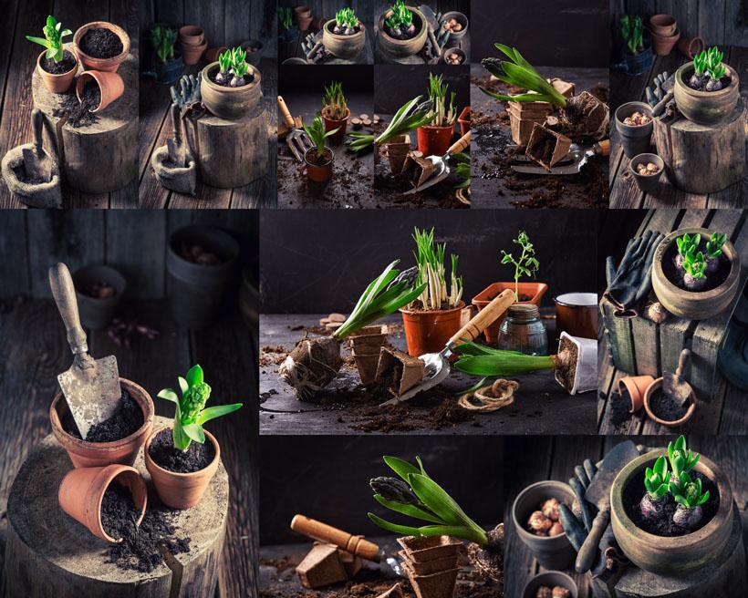 盆栽植物拍攝高清圖片