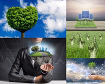 綠草植物攝影高清圖片