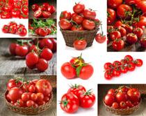 新鲜西红柿展示摄影高清图片