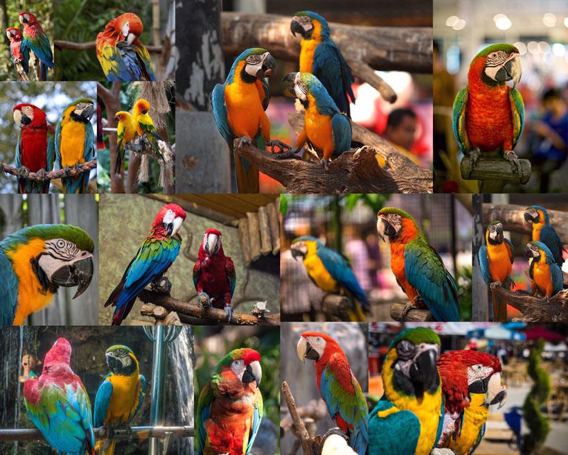 鹦鹉鸟类摄影高清图片