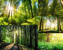 陽光下的植物森林攝影高清圖片