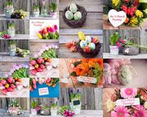 礼物鲜花摄影高清图片