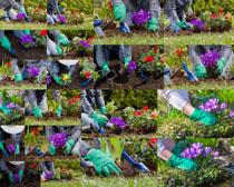 种植花朵拍摄高清图片