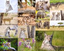 豹子大象猴子攝影高清圖片