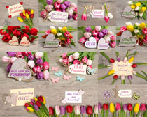 节日鲜花与卡片摄影高清图片
