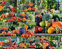 森林蔬菜大組合攝影高清圖片