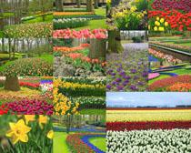 公园美丽花朵摄影高清图片