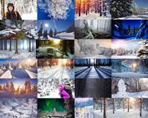 雪景树木拍摄高清图片