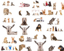 免摳動物攝影高清圖片