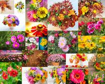 漂亮的鲜花摄影高清图片