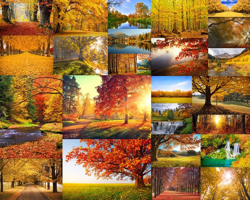 秋天树木美丽风景拍摄高清图片