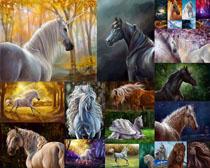 夢幻馬動物攝影高清圖片