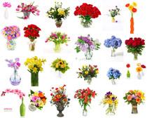 美丽的鲜花展示拍摄高清图片