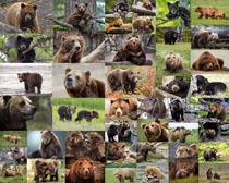 动物狗熊摄影高清图片