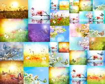彩色蝴蝶与花朵摄影高清图片