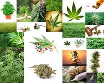 本草植物攝影高清圖片