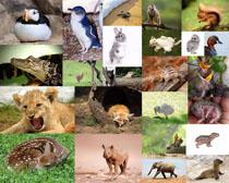 各种动物拍摄摄影高清图片