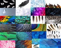 漂亮的彩色羽毛摄影高清图片