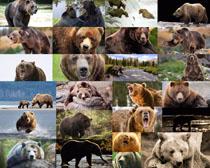 狗熊动物摄影高清图片