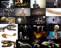 骨頭化石展示攝影高清圖片