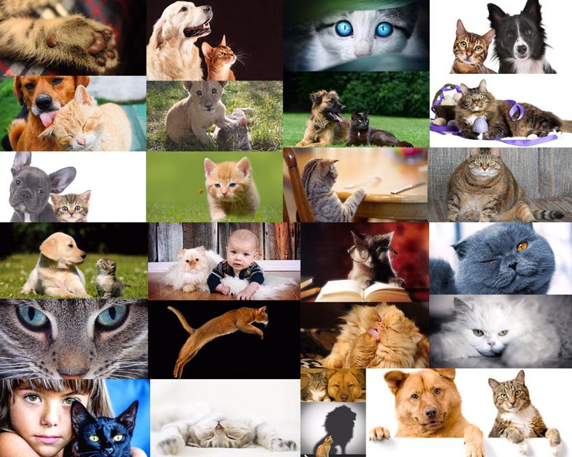 猫咪与狗可爱拍摄高清图片