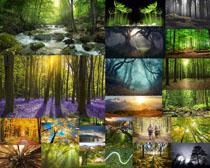 陽光植物森林攝影高清圖片