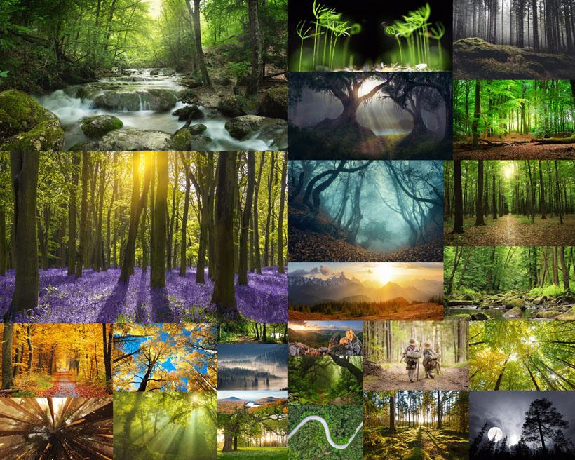 阳光植物森林摄影时时彩娱乐网站