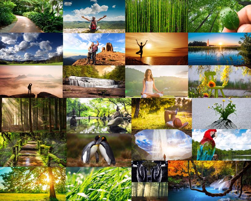 大自然植物風景攝影高清圖片