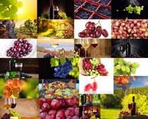 新鲜葡萄与庄园摄影高清图片