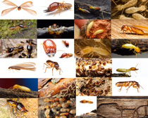 蚂蚁飞虫摄影高清图片
