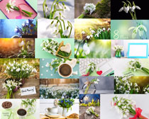 美丽的水仙花摄影高清图片