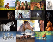 温顺的马摄影高清图片