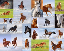 奔跑的马动物摄影高清图片