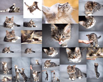 可爱猫咪摄影高清图片