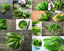 綠色植物食材攝影高清圖片