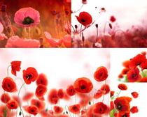 漂亮的红色花朵摄影高清图片