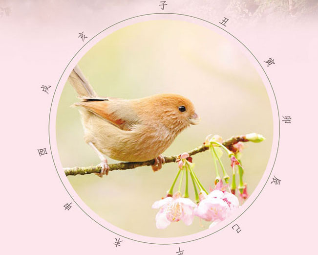 淡雅封面小鸟PSD模板