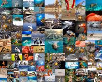 动物大集合摄影高清图片