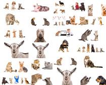动物头部摄影高清图片