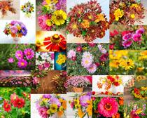 漂亮的色彩鲜花摄影高清图片