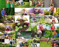 花园植物维修师摄影高清图片
