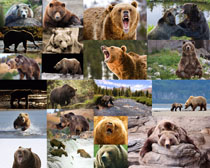 動物狗熊拍攝高清圖片