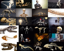 骷髅人体摄影时时彩娱乐网站