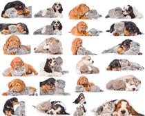 可爱爬爬狗摄影高清图片