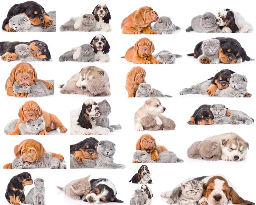 可爱爬爬狗摄影时时彩娱乐网站