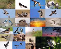 比翼双飞鸟摄影高清图片