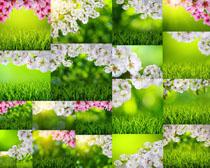 春天花朵与草摄影高清图片