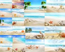 沙滩贝壳风景摄影高清图片